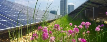 Pollinators and Solar Energy on a green roof – a win-win