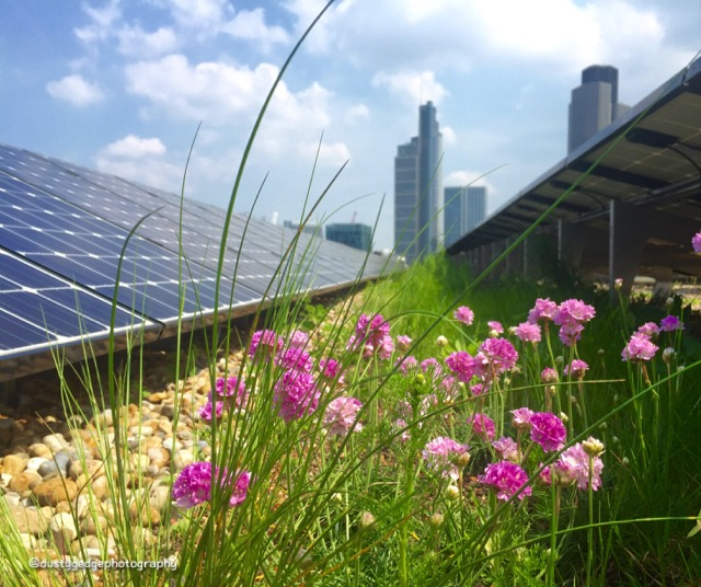 pollinators renewable energy on a green roof