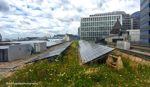 green roofs solar panels and pollinators