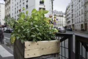 The Greening Permit In Paris