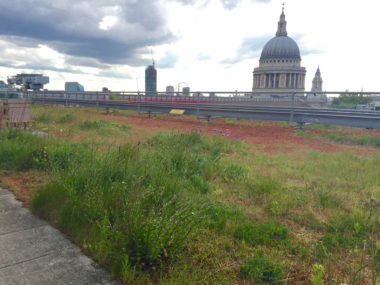 A dry meadow green roof in the heart of London –  GIC Projects