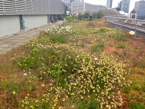 dry meadow green roof - London