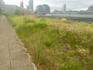 extensive green roof London