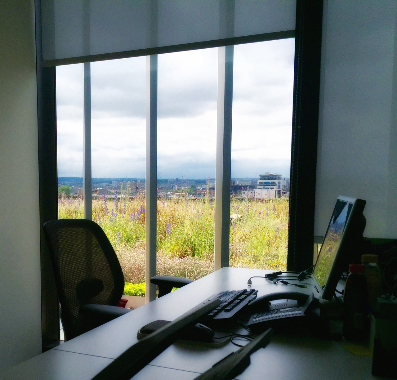 plants at work - viewing a green roof
