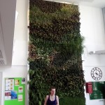 green wall at the Lancet.