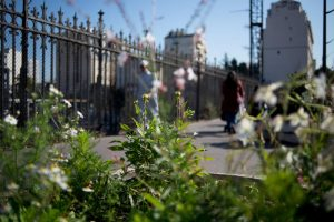 The greening permit scheme is aimed at public space