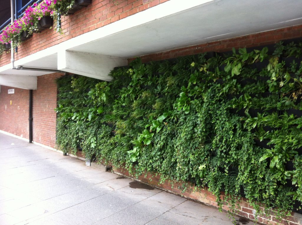 Green Infrastructure Audits - Vertical Rain Garden