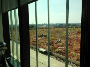 PwC More London – Biodiverse Extensive Green Roof