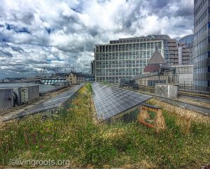 biosolar roof london, an example of green infrastructure designing by GIC