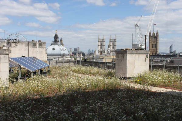Green roof inspections and sign offs are becoming increasing important