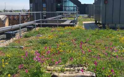 Cambridge green roof policy workshop and seminar