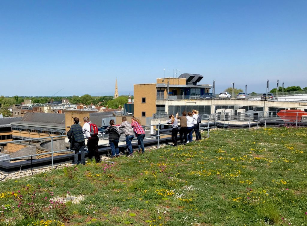 Cambridge green roof policy - green roof visit