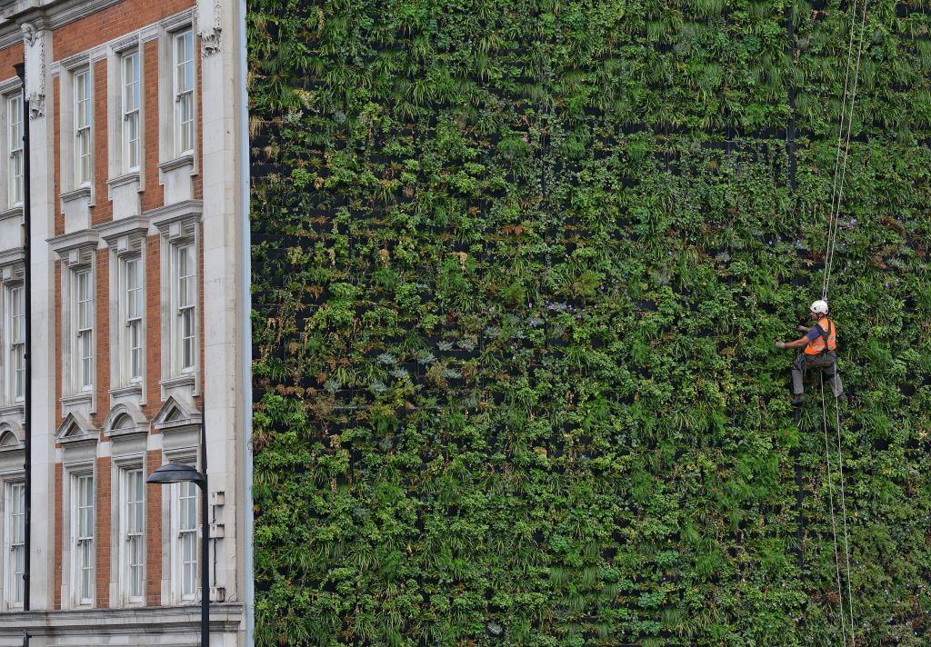 Rubens at the Palace Hotel Green Wall (2012)